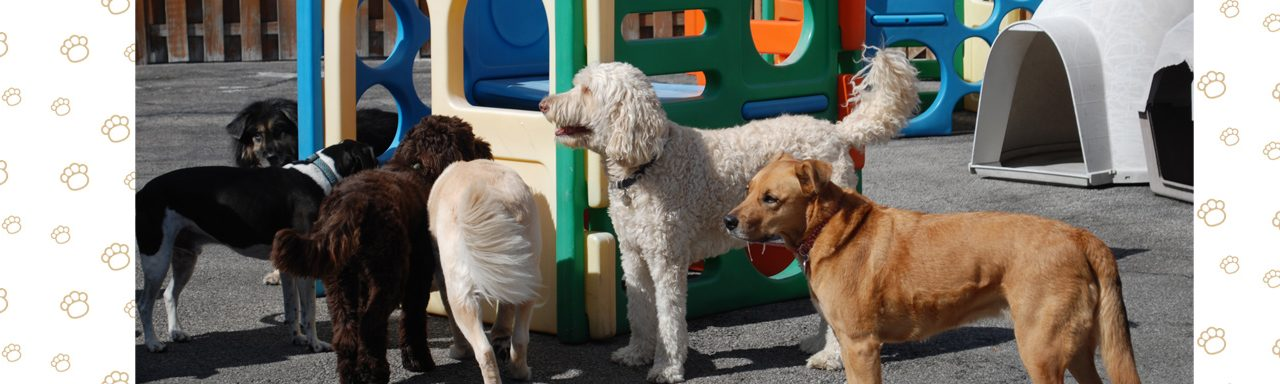 Doggie Day Care - Pack of Dogs on Playground