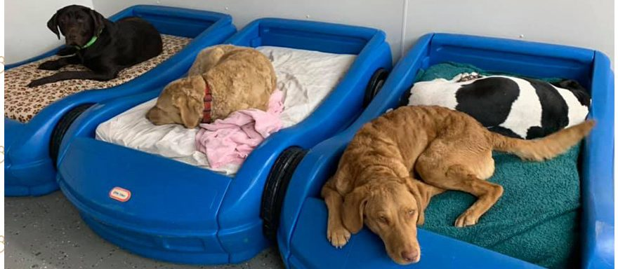 Kennel Free Overnight Boarding